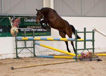 Carrick Diamond Prince loose jumping