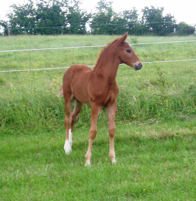 Carrick Diamond Lad foal
