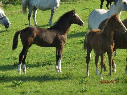 2012foals3and4