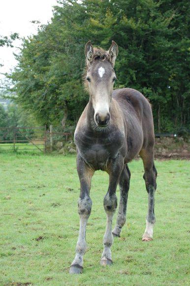 foal88