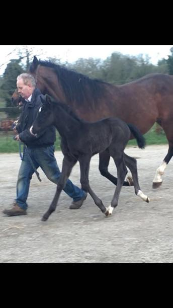 By Carrick Diamond Lad ex Clover Hill mare.